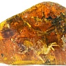 fossil_found_in_amber_05